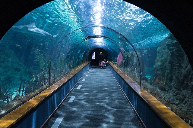 aquarium gestalten teil 2_everythingmustgonyc